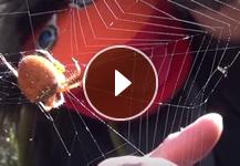 Webisode #2 - Spider